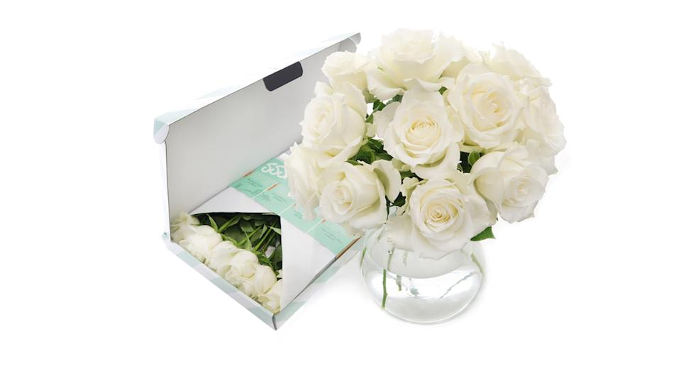 White Letterbox Roses