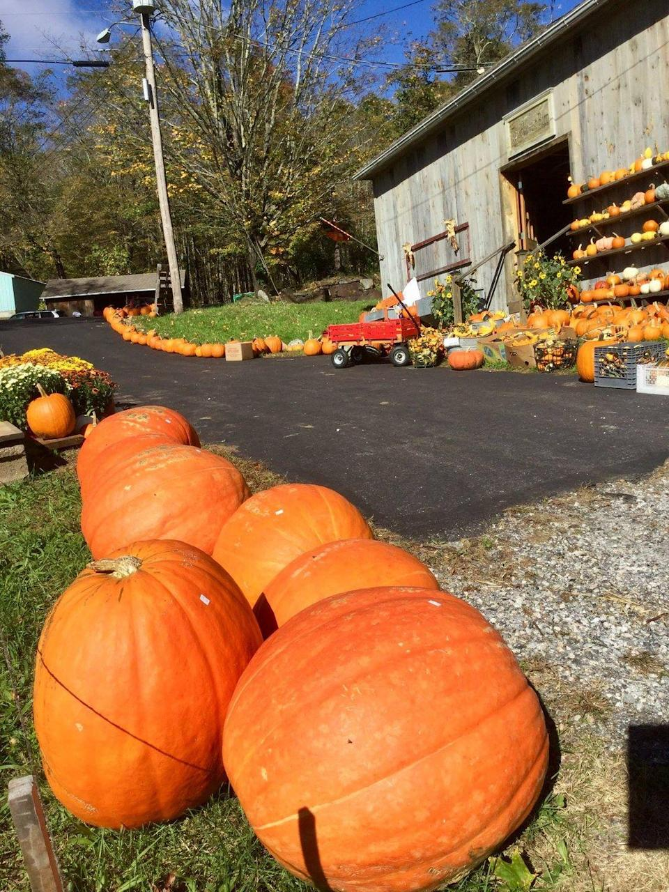 """<p>If you were hoping to snap a few family photos for this year's Christmas card during your pumpkin-picking adventure, <a href=""""http://angevinefarm.com/"""" rel=""""nofollow noopener"""" target=""""_blank"""" data-ylk=""""slk:Angevine Farm"""" class=""""link rapid-noclick-resp"""">Angevine Farm </a>is a good bet. The farm's pumpkin patch overlooks a series of stunning hills. After you've selected a few orange beauties, head to the Harvest Barn shop, where maple syrup and local honey await.</p><p><a class=""""link rapid-noclick-resp"""" href=""""https://go.redirectingat.com?id=74968X1596630&url=https%3A%2F%2Fwww.tripadvisor.com%2FAttraction_Review-g33960-d5513097-Reviews-Angevine_Farm-Warren_Connecticut.html&sref=https%3A%2F%2Fwww.countryliving.com%2Flife%2Ftravel%2Fg21273436%2Fpumpkin-farms-near-me%2F"""" rel=""""nofollow noopener"""" target=""""_blank"""" data-ylk=""""slk:PLAN YOUR TRIP"""">PLAN YOUR TRIP</a></p>"""