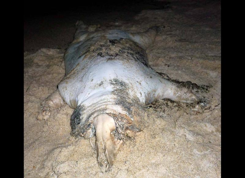 """Was it a dog or a pig or something else? Nobody knows for sure, but this animal was discovered in 2009 on a beach in Southold, on the North Fork area of New York's Long Island. Subsequent photos were published on <a href=""""www.montauk-monster.com"""" target=""""_hplink"""">Montauk Monster</a>."""