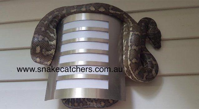 The resident had done a number of trips unloading groceries before noticing something sitting nearby. Source:Snake Catchers Brisbane, Ipswich, Logan & Gold Coast