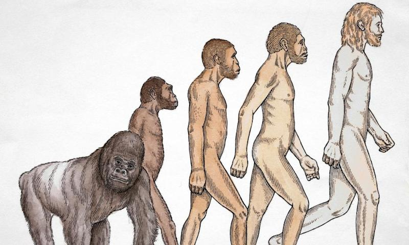 Human evolution from ape to modern man illustration