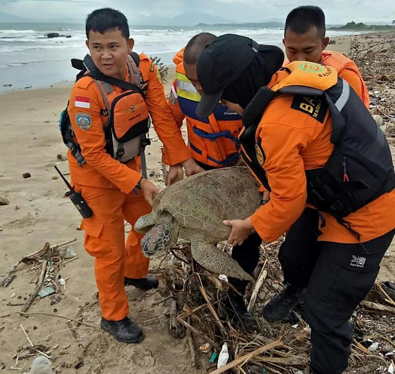 It took four staff to haul the giant sea turtle back to sea after it became trapped in a pile of marine trash in the wake of Indonesia's deadly tsunami