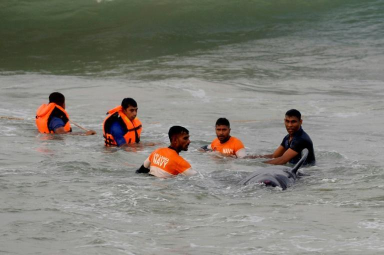 Sri Lankan Navy soldiers try to push a pilot whale back into the water