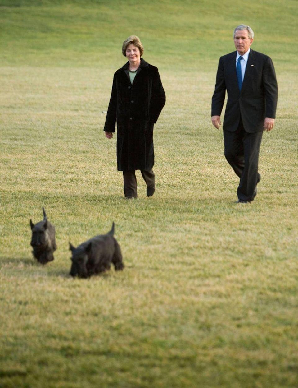 <p>U.S. President George W. Bush walks from Marine One to the White House with First Lady Laura Bush and family dogs Miss Beazley and Barney.</p>