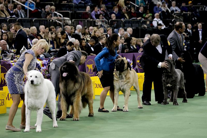 Best In Terrier Group For National Dog Show