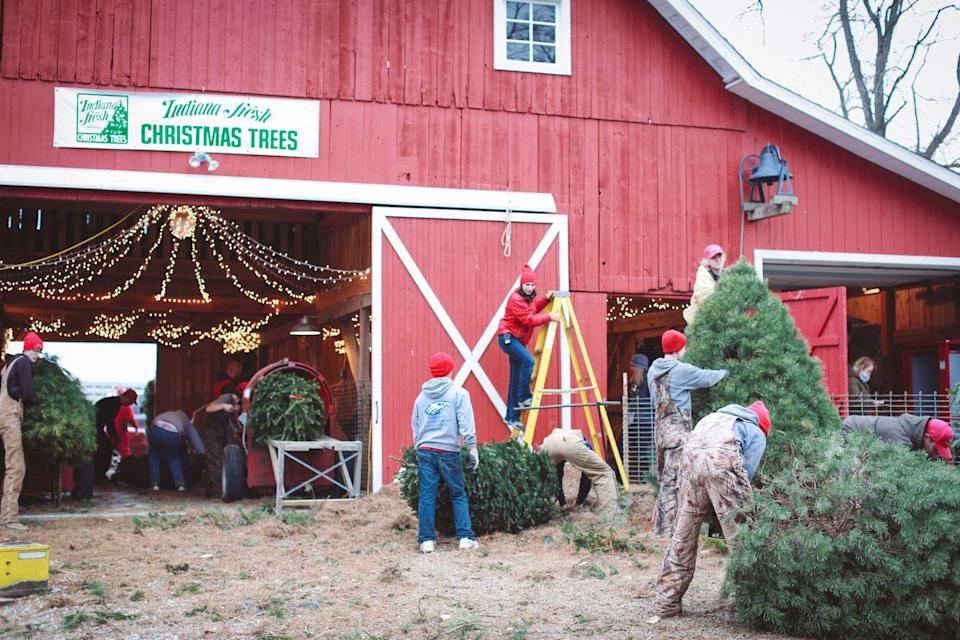 """<p><strong>Thorntown, Indiana</strong> (Starting November 29)</p><p>You'll find people smiling and chopping away on any day during the Christmas season at <strong><a href=""""http://dullstreefarm.com/"""" rel=""""nofollow noopener"""" target=""""_blank"""" data-ylk=""""slk:Dull's Tree Farm"""" class=""""link rapid-noclick-resp"""">Dull's Tree Farm</a></strong>, but there's one date on everyone's calendar: Newfoundland Day. On December 2, the South Central Newfoundland Club brings these big dogs in to help make your tree picking experience even more special.</p>"""