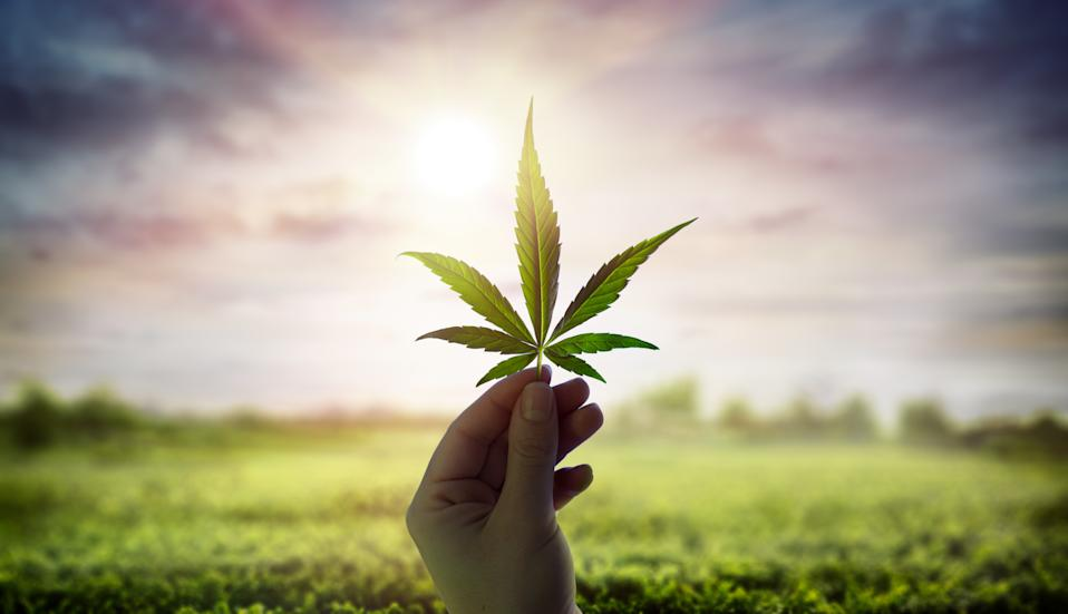 Hand Showing Cannabis Leaf Against Sky With Sunlight