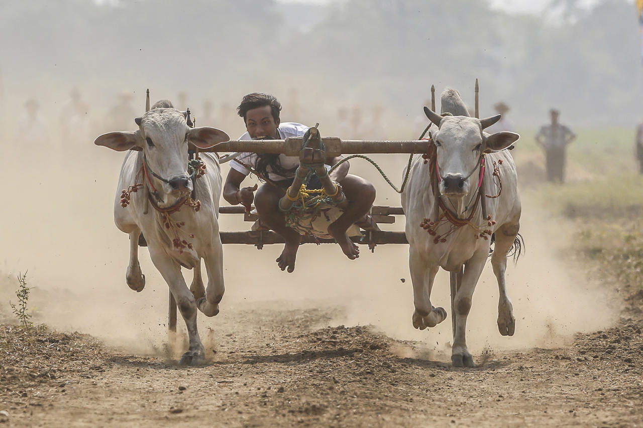 <p>A man rides a bullock cart during the traditional racing festival on the outskirts of Naypyitaw, Myanmar, April 1, 2017. The famous traditional race takes place during summer in Myanmar. (Photo: Hein Htet/EPA) </p>