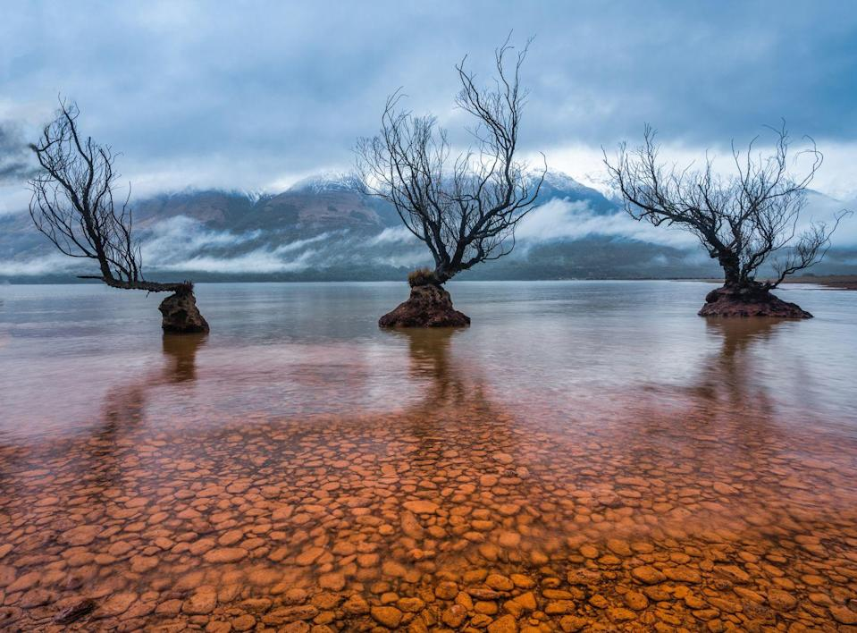 <p>It's hard to believe this scene even exists on planet Earth, but the Willow Trees of Glenorchy sit on the shore of Lake Wakatipu.</p>