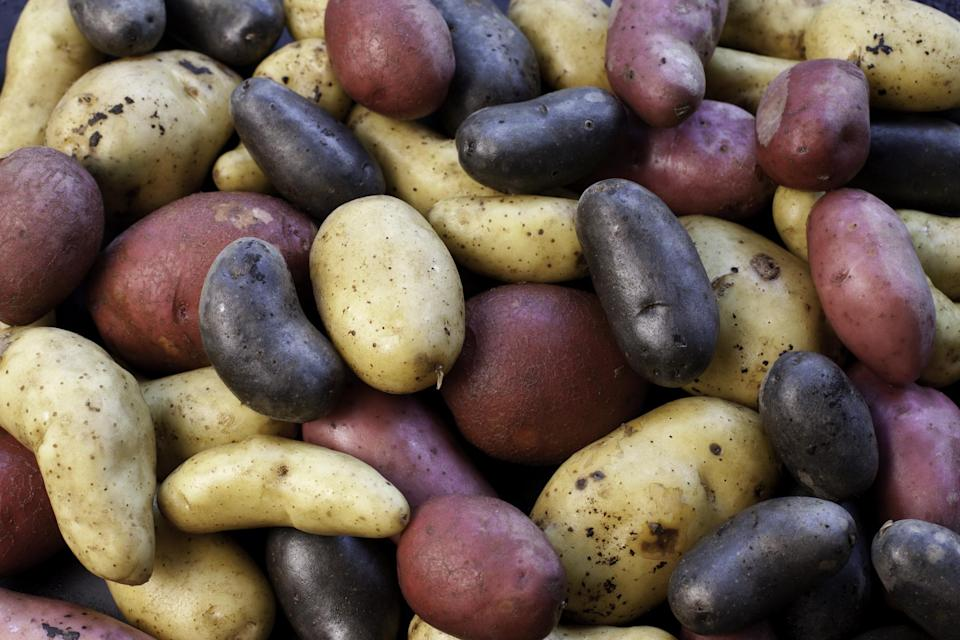"""<p>Potato season will vary, but it begins in the summer and continues strongly through the fall in most regions of the U.S. <a href=""""https://www.thedailymeal.com/cook/50-great-ways-cook-potatoes-0?referrer=yahoo&category=beauty_food&include_utm=1&utm_medium=referral&utm_source=yahoo&utm_campaign=feed"""" rel=""""nofollow noopener"""" target=""""_blank"""" data-ylk=""""slk:Potatoes have many marvelous uses"""" class=""""link rapid-noclick-resp"""">Potatoes have many marvelous uses</a> — some of our favorite fall preparations include <a href=""""https://www.thedailymeal.com/recipes/creamy-creamy-mashed-potatoes-recipe?referrer=yahoo&category=beauty_food&include_utm=1&utm_medium=referral&utm_source=yahoo&utm_campaign=feed"""" rel=""""nofollow noopener"""" target=""""_blank"""" data-ylk=""""slk:classic mashed potatoes"""" class=""""link rapid-noclick-resp"""">classic mashed potatoes</a>, <a href=""""https://www.thedailymeal.com/recipes/scalloped-golden-potatoes-rosemary-and-thyme-recipe?referrer=yahoo&category=beauty_food&include_utm=1&utm_medium=referral&utm_source=yahoo&utm_campaign=feed"""" rel=""""nofollow noopener"""" target=""""_blank"""" data-ylk=""""slk:scalloped potatoes"""" class=""""link rapid-noclick-resp"""">scalloped potatoes</a>, <a href=""""https://www.thedailymeal.com/recipes/classic-baked-potato-recipe?referrer=yahoo&category=beauty_food&include_utm=1&utm_medium=referral&utm_source=yahoo&utm_campaign=feed"""" rel=""""nofollow noopener"""" target=""""_blank"""" data-ylk=""""slk:loaded baked potatoes"""" class=""""link rapid-noclick-resp"""">loaded baked potatoes</a> and <a href=""""https://www.thedailymeal.com/potato-soup-0-recipe?referrer=yahoo&category=beauty_food&include_utm=1&utm_medium=referral&utm_source=yahoo&utm_campaign=feed"""" rel=""""nofollow noopener"""" target=""""_blank"""" data-ylk=""""slk:potato soup"""" class=""""link rapid-noclick-resp"""">potato soup</a>.</p>"""