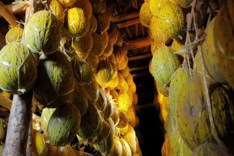 Melons hang from wooden beams in the village of Vazir in the northwest of Uzbekistan