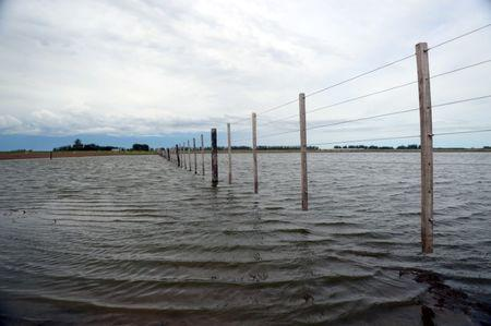 A flooded field that had been used to plant soy is seen near Norberto de la Riestra, Argentina, January 8, 2019. Picture taken January 8, 2019. REUTERS/Marcos Brindicci