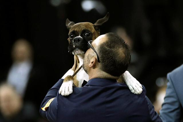 REFILE - CORRECTING HIS HANDLER TO HER HANDLER Devlin, a Boxer, is lifted by her handler Diego Garcia after winning the Working Group judging at the 141st Westminster Kennel Club Dog Show at Madison Square Garden in New York City, U.S., February 14, 2017. REUTERS/Mike Segar