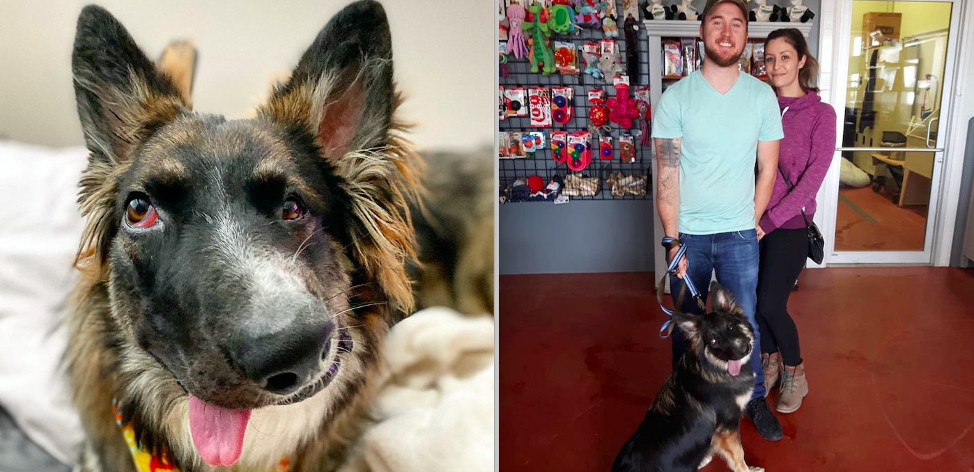 Wonky-faced Brodie the German Shepherd Border Collie has found a new home (SWNS)