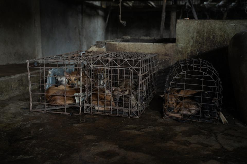 Cages with dogs inside them in front of tanks used to drown dogs.