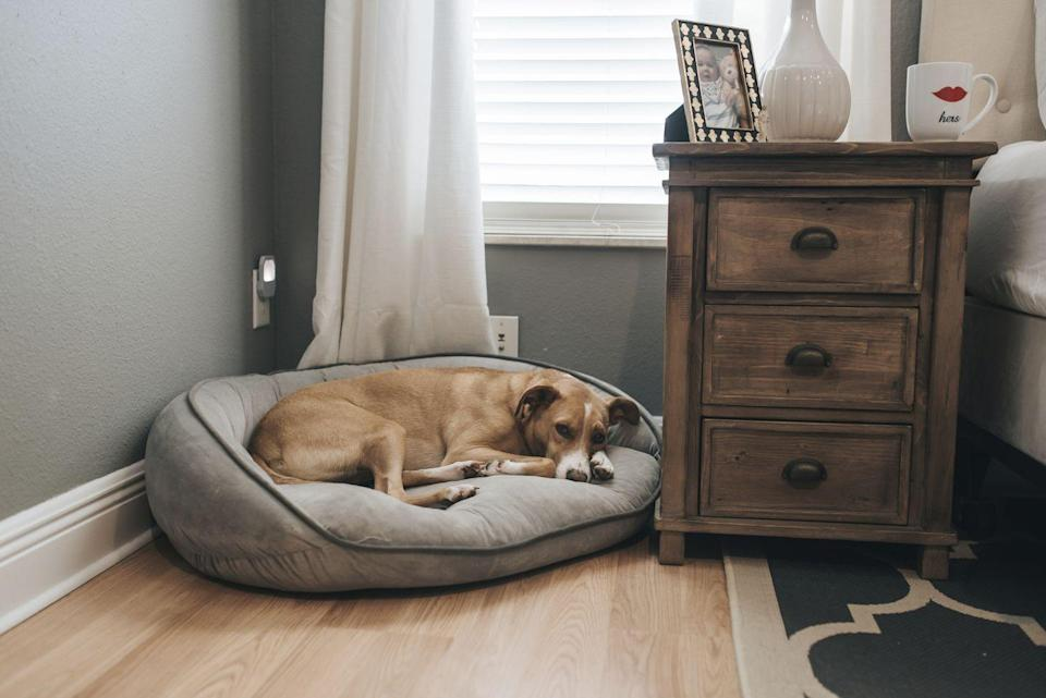 """<p>By building a calm environment, you can encourage calm behavior in your dog. """"Play soothing music, such as soft classical music or smooth jazz while you're not home,"""" Dr. JoAnna Pendergrass, DVM at Honest Paws, tells Woman's Day. You may also want to consider pheromones, like a DAP electric diffuser, to provide a relaxing scent for your dog throughout the day.<br></p><p>And while you're at it, try switching his current bed for a Bolster bed. </p><p>""""<a href=""""https://www.amazon.com/BarkBox-Orthopedic-Washable-Removable-Waterproof/dp/B07Y2GQF75/ref=sr_1_2?dchild=1&keywords=bolster+bed&qid=1594230119&sr=8-2"""" rel=""""nofollow noopener"""" target=""""_blank"""" data-ylk=""""slk:Bolster beds"""" class=""""link rapid-noclick-resp"""">Bolster beds</a>, also known as donut-shaped cuddler beds, help calm anxious dogs down by mimicking their natural nesting behavior,"""" Dr. Heather Venkat, DVM, MPH, DACVPM, tells Woman's Day. """"Similar to a swaddle for a baby, the high comfy sides help the dog feel safe and relaxed.""""</p>"""