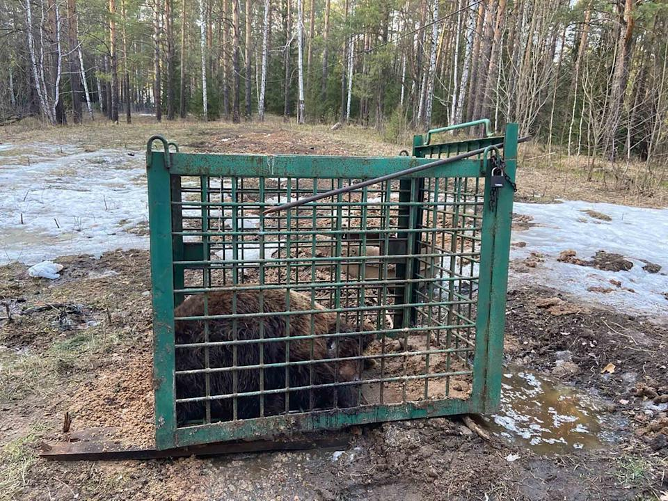 The bear has since been sold and cannot be found by activists. Source: East2West/ Australscope