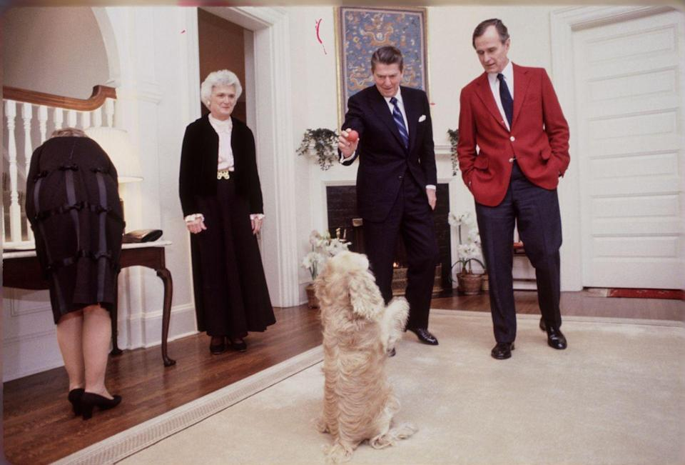 <p>President Ronald Reagan, Vice President George H. W. Bush, and their wives, Nancy and Barbara, played with a dog at the Vice President's residence. </p>