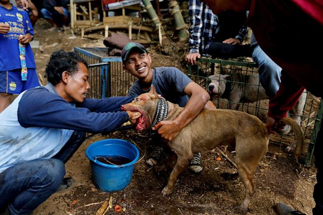 <p>A dog-handler cleans blood from his dog which bit a boar in a fight during a contest, known locally as 'adu bagong' (boar fighting), in Cikawao village of Majalaya, West Java province, Indonesia, Sept. 24, 2017. (Photo: Beawiharta/Reuters) </p>