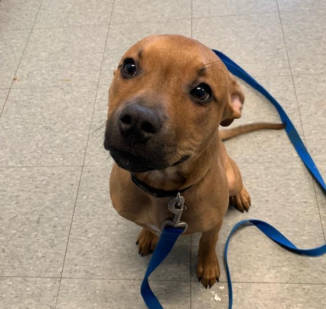 Larry, a 6-month-old pittie-mix was adopted thanks to the pizza box campaign. (Photo: Kimberly LaRussa)