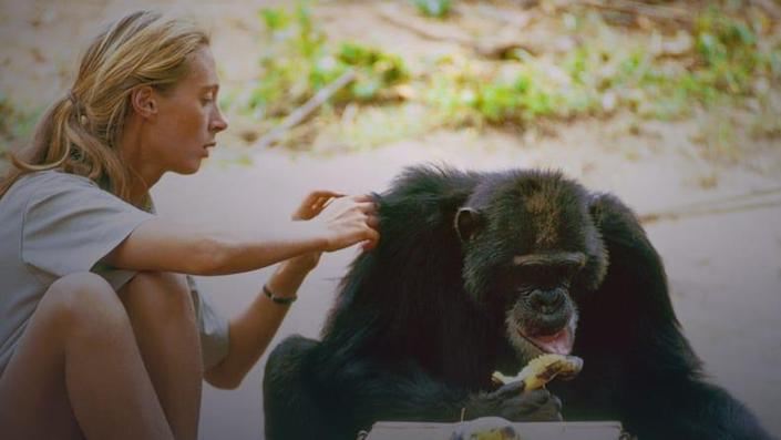 Watch decades of unseen footage of Jane Goodall and her jungle research.