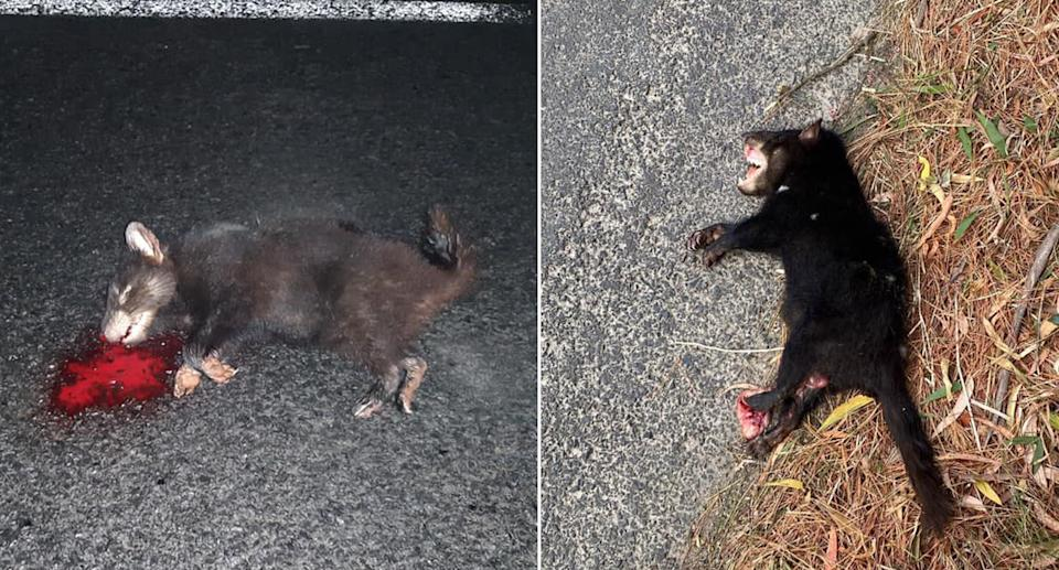 The endangered animals are becoming road kill in the state's north. Source: Facebook/