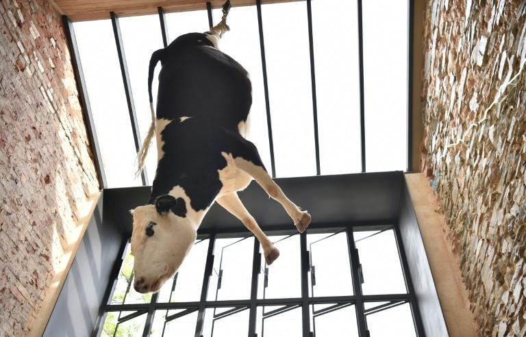 Owners Federico and Melissa Pisanelli, who are passionate about animal welfare, defended their decision to hang the large Friesian-Hereford cow from her hind legs, saying they wanted to remind patrons of how meat was sourced