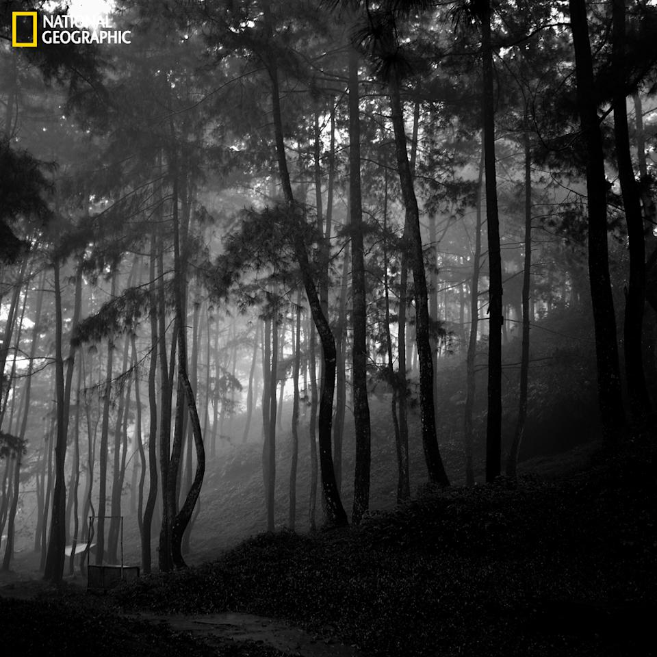 "Mist in the forest. (Photo and caption Courtesy Denny Ch Pratama / National Geographic Your Shot) <br> <br> <a href=""http://ngm.nationalgeographic.com/your-shot/weekly-wrapper"" rel=""nofollow noopener"" target=""_blank"" data-ylk=""slk:Click here"" class=""link rapid-noclick-resp"">Click here</a> for more photos from National Geographic Your Shot."