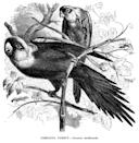 "<p>The Carolina parakeet was the only bird of its kind native to the eastern portion of the U.S. The last Carolina parakeet died at the Cincinnati Zoo in February of 1918 soon after his mate, Lady Jane, passed.</p><p><strong>Cause of Extinction:</strong> the <a href=""https://www.smithsonianmag.com/science-nature/why-carolina-parakeet-go-extinct-180968740/"" rel=""nofollow noopener"" target=""_blank"" data-ylk=""slk:Smithsonian"" class=""link rapid-noclick-resp"">Smithsonian</a> notes that while a specific reason doesn't explain the parakeet's extinction, it's likely that deforestation and disease are what offed the brightly colored birds. It also didn't help that their feathers were coveted fashion fixtures for women's hats.</p>"
