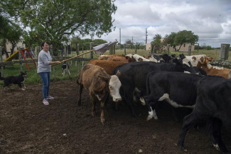 Rosa Correa's farm is one of 62 involved in a project to try to reduce livestock emissions through 'smart climate practices'