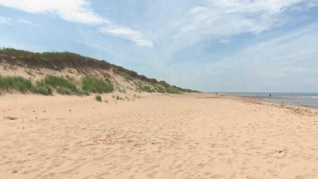 There is not a lot holding sand dunes together, says researcher Jeff Ollerhead. (CBC - image credit)