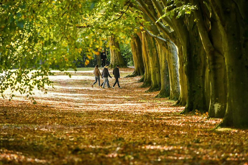 <p>People walk through windblown leaves in Clifton, Bristol, where autumnal weather takes effect and trees continue to drop their leaves </p>