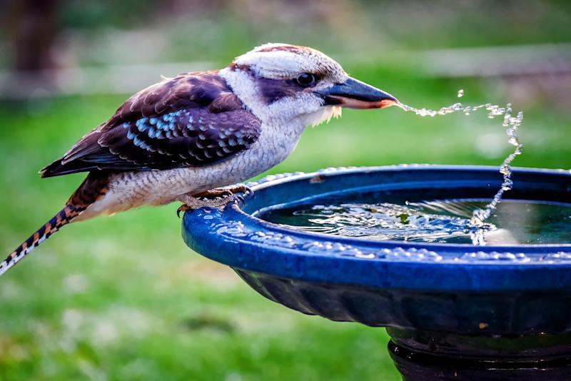 Leaving water out for animals is an easy way to help. Image: Getty