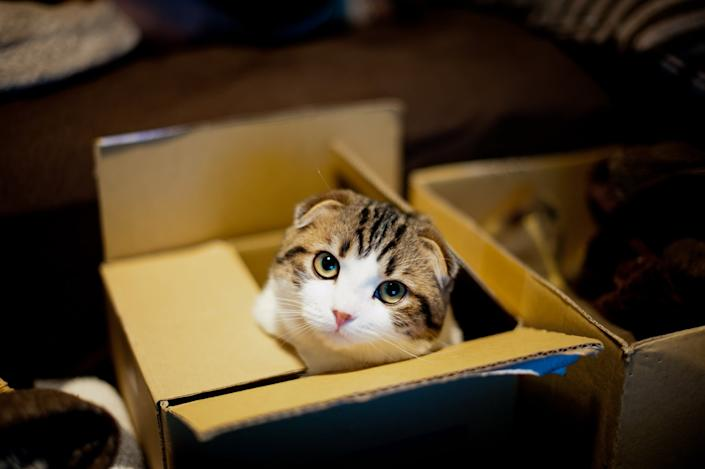 Why Cats Love Cardboard Boxes