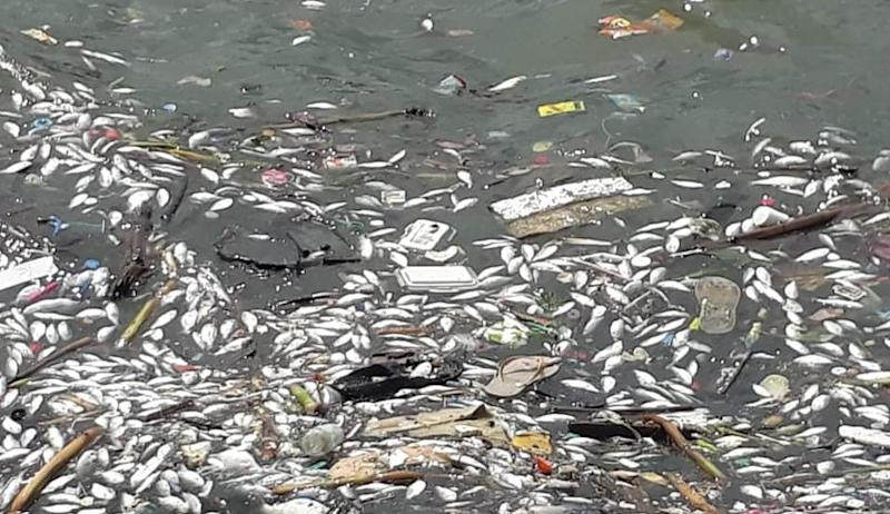 Dead fish floating in Manila Bay raises questions on ...