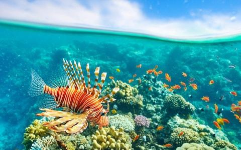 Lionfish seen here in the Red Sea - Credit: Jan Wlodarczyk / Alamy Stock Photo