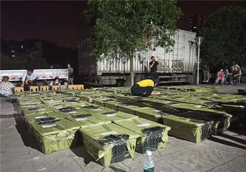 Animal rescue volunteers inspect boxes containing live animals in Chengdu, Sichuan province, on May 3, 2021. / Credit: Chengdu Love Home Animal Rescue Center / Weibo