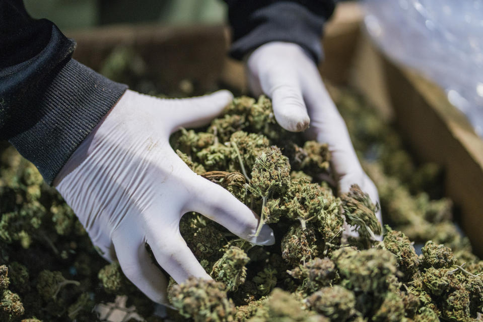 HEXO is set to acquire Zenabis in a $235 million all-stock deal. (AP Foto/Matilde Campodonico)