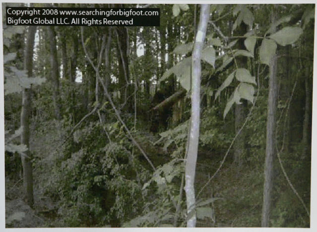 This still frame image from video provided by Bigfoot Global LLC, shows what is claimed by them to be a bigfoot or sasquatch creature in an undisclosed area of a northern Georgia forest in June 2008. (AP Photo/Bigfoot Global LLC)
