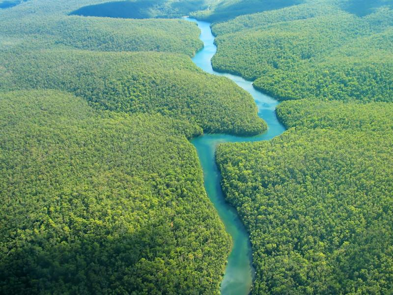 The Amazon is among the rainforests most at risk from rising temperatures: Getty