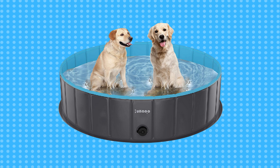Let your pet get in on the summer fun. (Photo: Amazon)