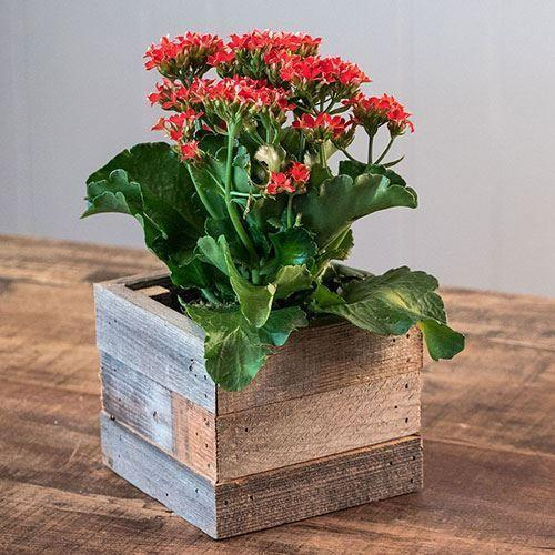 "<p>jacksonandperkins.com</p><p><strong>$39.95</strong></p><p><a href=""https://www.jacksonandperkins.com/kalanchoe-in-reclaimed-wood/p/22930/"" rel=""nofollow noopener"" target=""_blank"" data-ylk=""slk:Shop Now"" class=""link rapid-noclick-resp"">Shop Now</a></p>"
