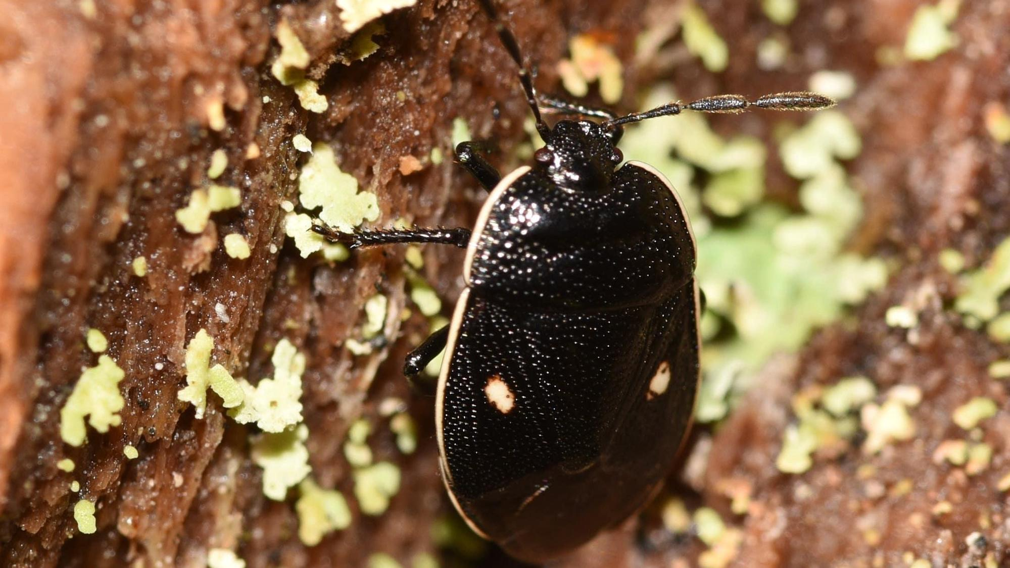 Rare insect rediscovered in Scotland after more than 30 years