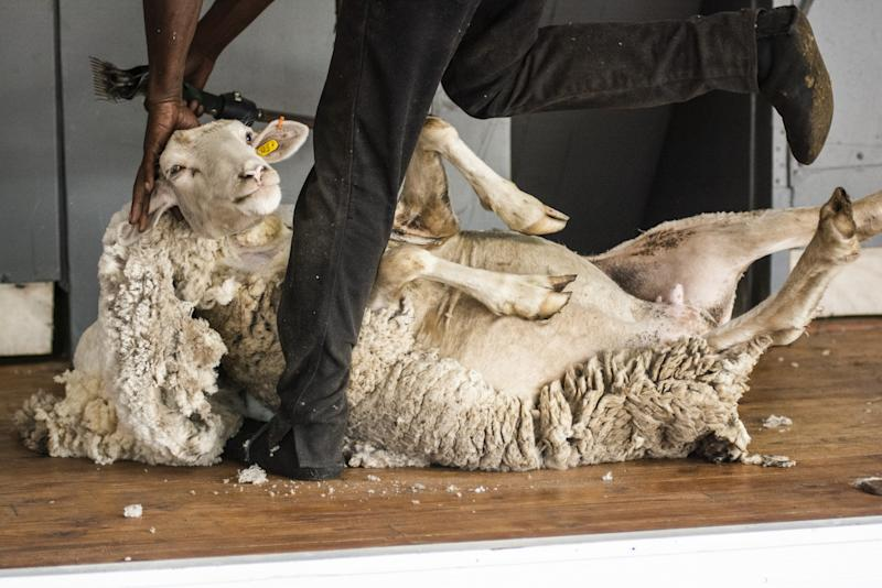South Africa's Wool Industry Has $325 Million Question for China