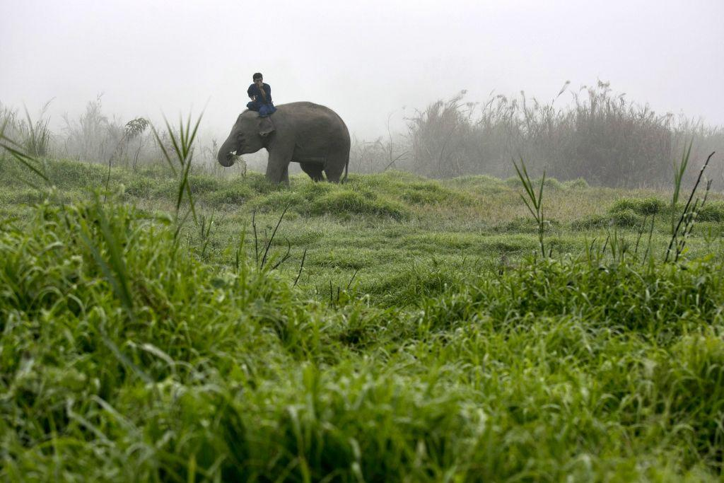A Thai mahout rides his elephant in the early morning fog at an elephant camp at the Anantara Golden Triangle resort in Golden Triangle, northern Thailand.