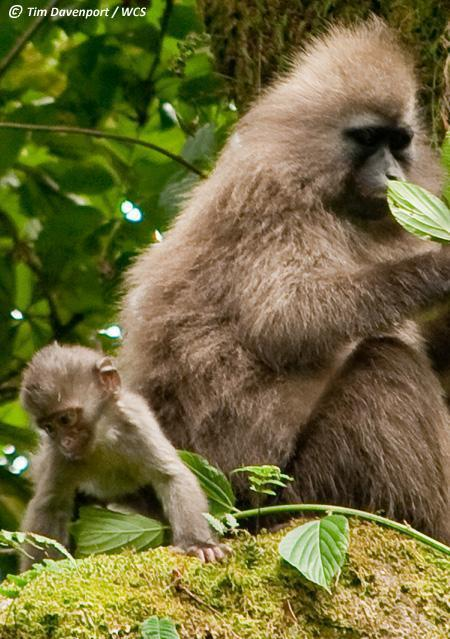 Rare Baby African Monkey Makes Photo Debut