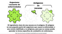 This illustration provided by LaGuardia Community College, shows a Spanish-language diagram explaining the function of antigens in vaccines, which is part of a brochure on COVID-19 produced by students at the college. The multilingual project was spearheaded by professor Lucia Fuentes, who guided her honors biology students in researching, preparing and publishing information on the coronavirus and the vaccines developed to counter it. (LaGuardia Community College via AP)