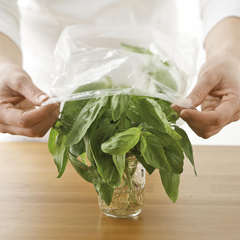 covering herbs with plastic