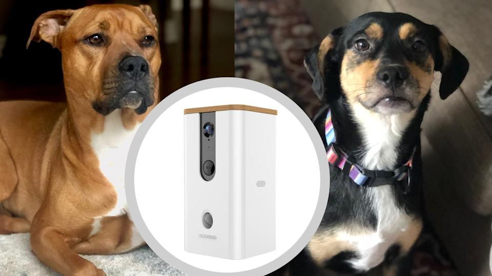 My dogs Delta (left) and Shiloh (right) put two Dogness Smart Products to the test. (Product Image via Best Buy Canada)