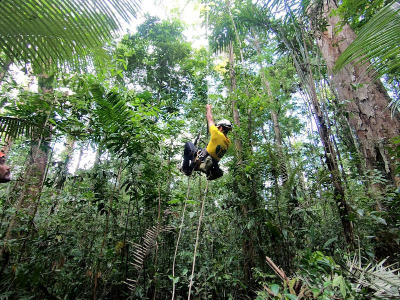 Climbing in the area close to the tallest tree in the Amazon (SWNS)